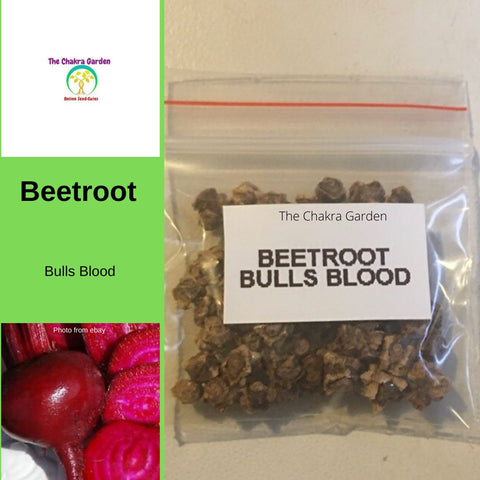 Beetroot 'Bulls Blood' - 50 Seeds - Vegetable Seeds - Base Chakra