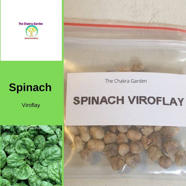 Spinach 'Viroflay' - 50 Seeds - Vegetable Seeds - Heart Chakra
