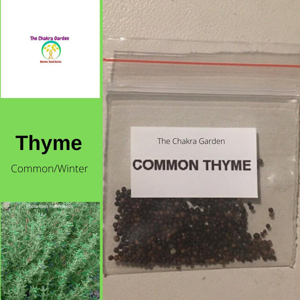 Thyme 'Common Thyme' - 200 Seeds - HERB Seeds - Crown Chakra