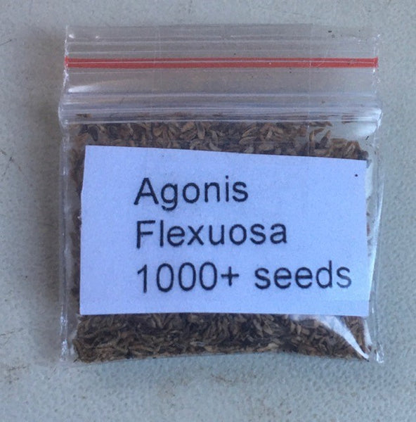Agonis Flexuosa-'Willow Myrtle'-1000+seeds