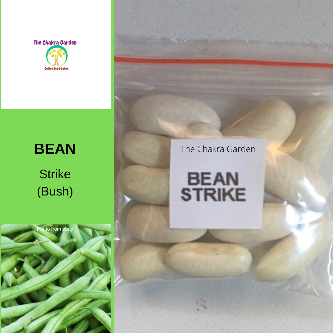 Bean 'Strike' (Bush)-20 seeds-VEGETABLES-Heart Chakra