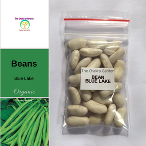 Bean 'Blue Lake'-25 seeds-Vegetable-Throat Chakra