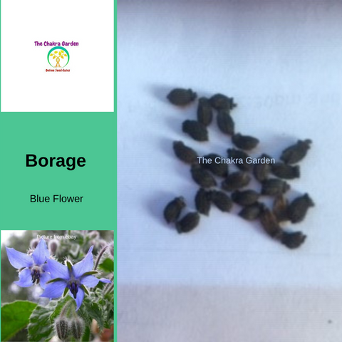 "Borage ""Blue Flower""-25 seeds-EDIBLE FLOWERS-Throat Chakra"