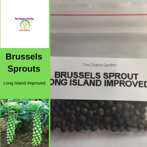Brussels Sprouts Long Island Improved - Vegetable 100 Seeds Heart Chakra