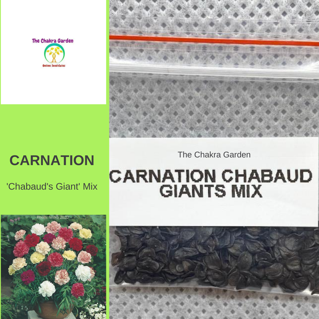 Carnation 'Chabaud's Giant'-EDIBLES-200 seeds-Crown Chakra