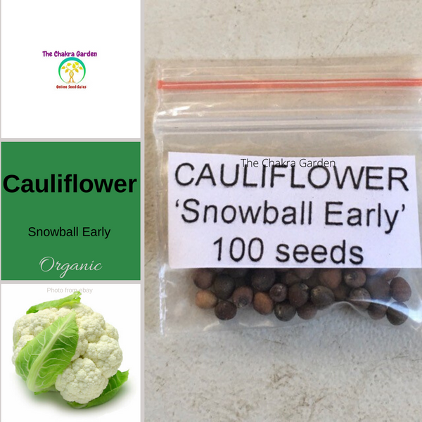 Cauliflower 'Snowball Early'  - Vegetable - 100 Seeds - Throat Chakra (Organic or Regular)