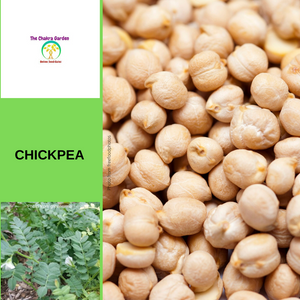 Chickpea-50 seeds-VEGETABLES-Organic-Solar Plexus