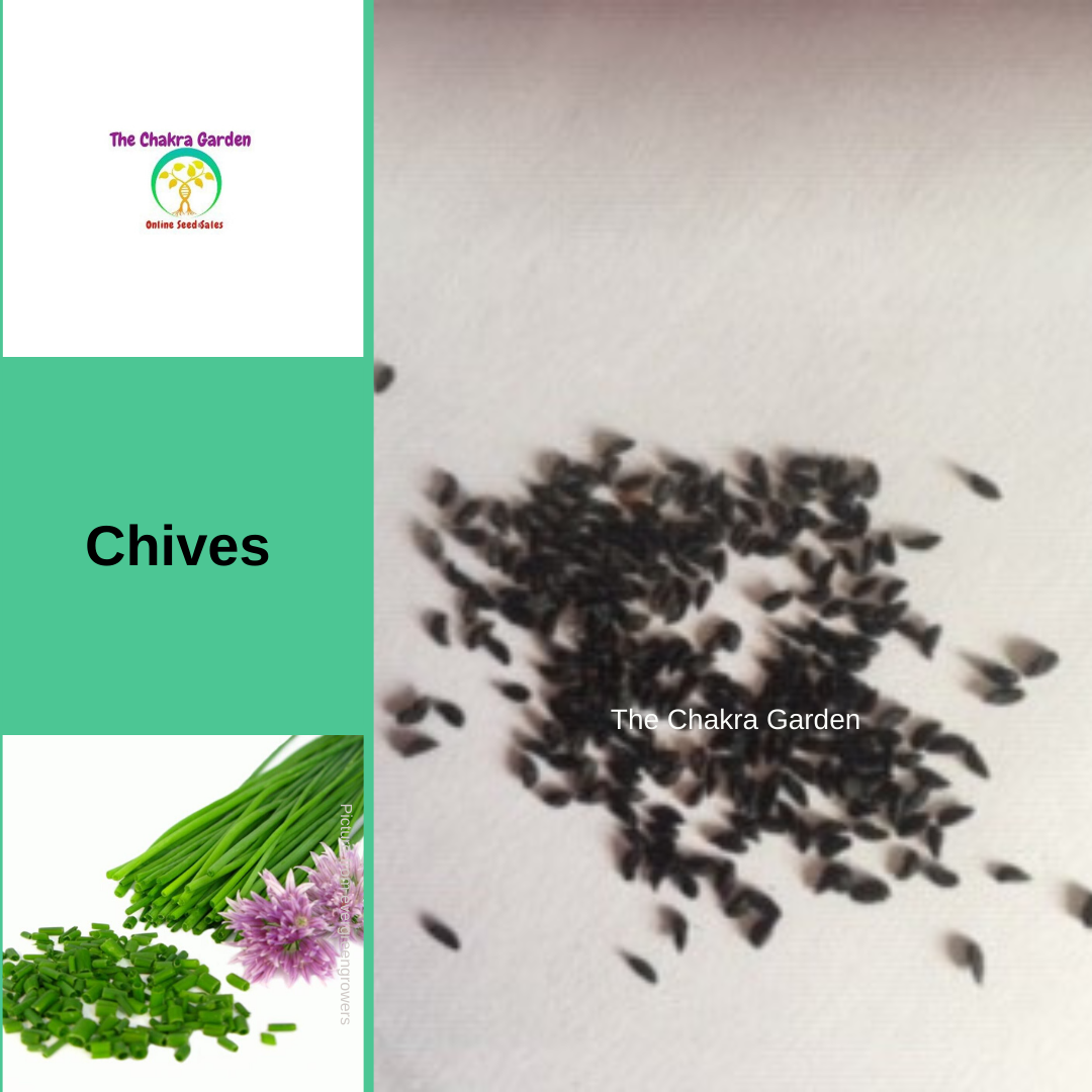 Chives-200 seeds-HERBS-Ajna Chakra