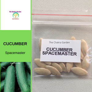 Cucumber 'Spacemaster'-Vegetable-20 seeds-Heart Chakra