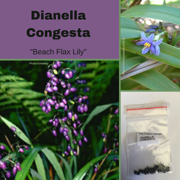 "Dianella Congesta ""Beach Flax Lily""-EDIBLES-Buy In Bulk-seeds"