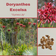 Doryanthes Excelsa 'Gymea lily'-FLOWER-25 seeds