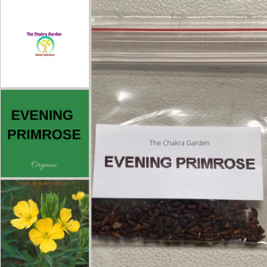 Evening Primrose-FLOWER-Therapeutic and Herbal-Solar Plexus Chakra-200 seeds