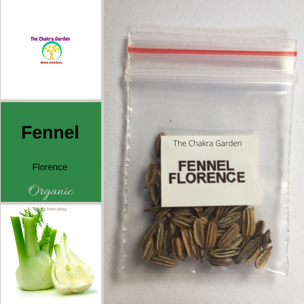 Fennel 'Sweet of Florence'-EDIBLES-50 seeds-Heart Chakra