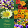 Garden Seed Planter Pack - Edible Flowers.