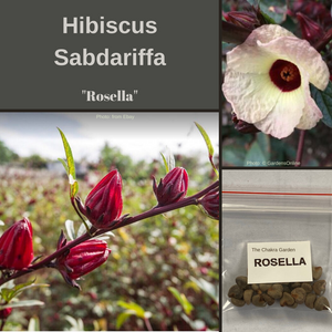 "Rosella-""Hibiscus sabdariffa""-EDIBLE-BUY IN BULK-seeds"