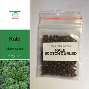 Kale 'Scotch Blue Curled'-200 seeds-Vegetables-Throat Chakra-Organic
