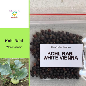 Kohl Rabi 'White Vienna'-EDIBLES-150 seeds-Crown Chakra