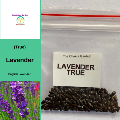 Lavender 'True'-HERBS-150 seeds-Crown Chakra