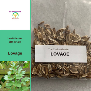 Levisticum officinale 'Lovage'-HERB- 200 seeds-Heart Chakra