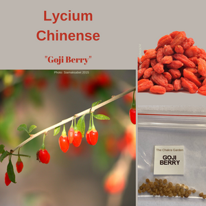 Lycium Chinense-'Goji Berry'-EDIBLE-50 seeds