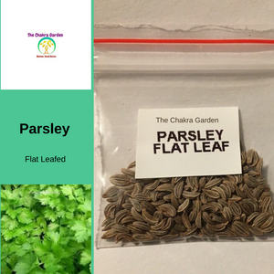 Parsley 'Italian Flat Leaf'-HERBS-200 Seeds-Heart Chakra