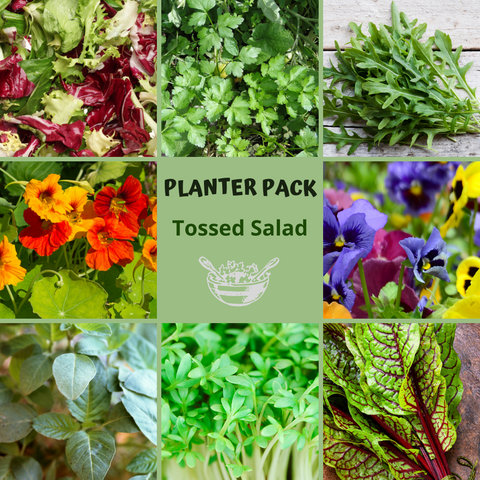 Garden Seed Planter Pack - Tossed Salad