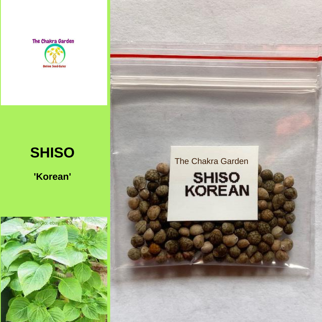 Shiso 'Korean'-EDIBLES-150 seeds-Heart Chakra