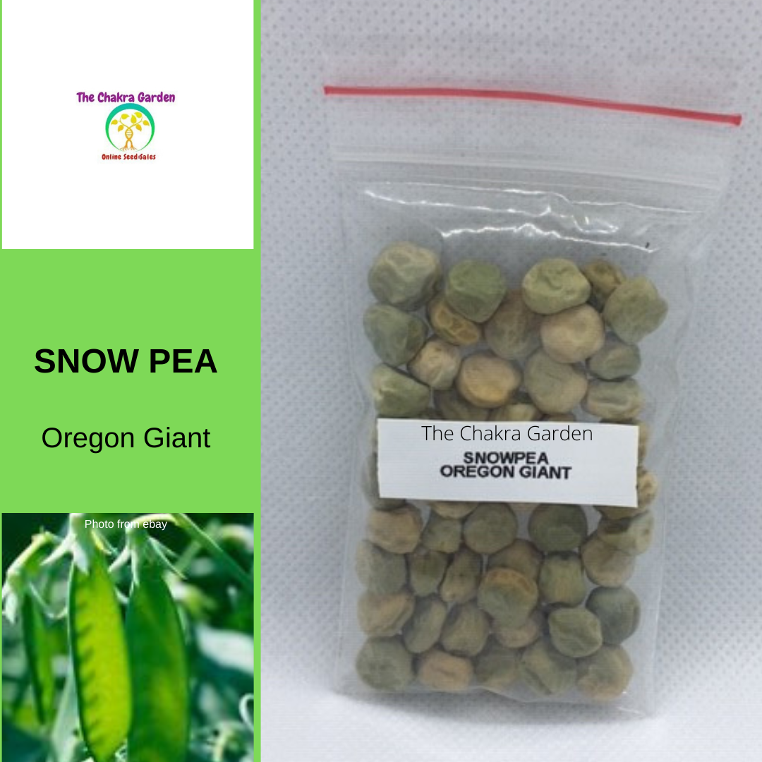 Snow Pea 'Oregon Giant'-Vegetable-50 seeds-Heart Chakra