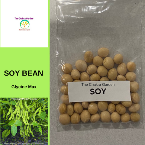 Beans-'Soy'- EDIBLES-50 seeds