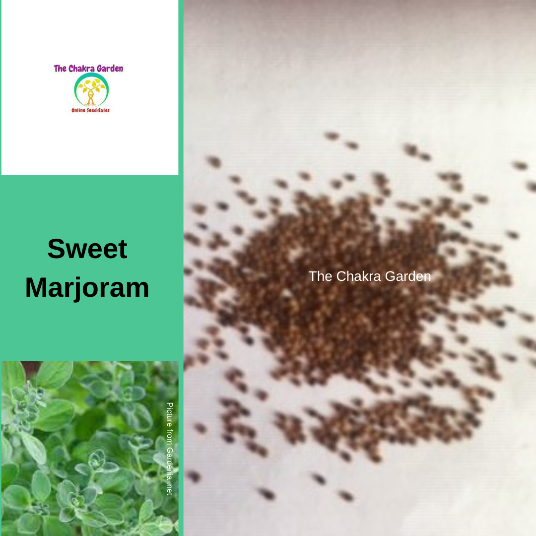 "Marjoram ""Sweet"" - 500 seeds-HERBS-Crown Chakra"