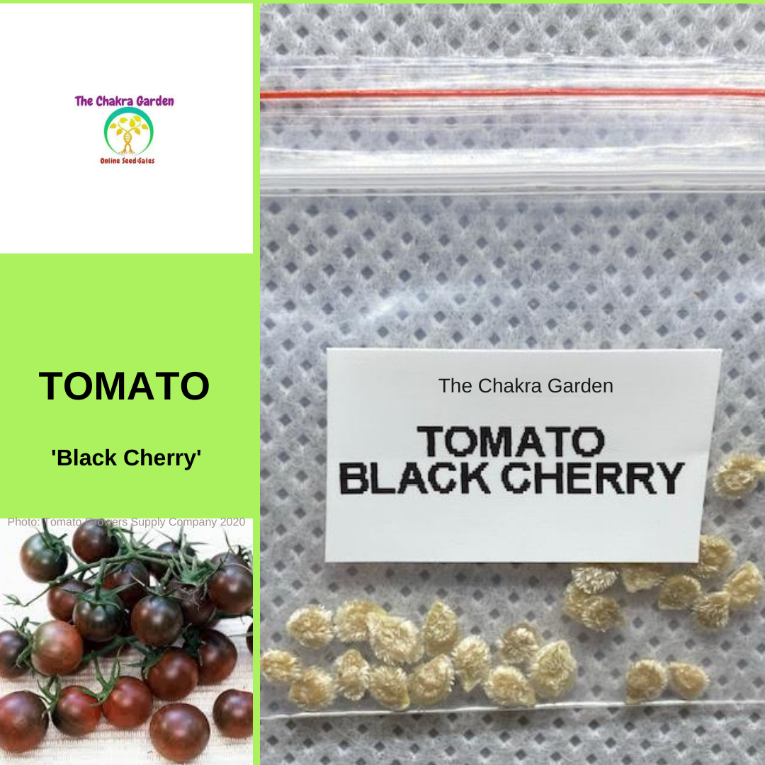 Tomato 'Black Cherry'-EDIBLES-25 seeds-Base Chakra