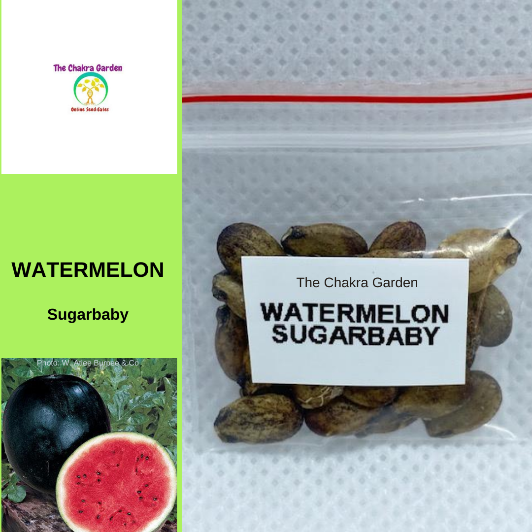 Watermelon 'Sugarbaby'-EDIBLE-25 seeds-Base Chakra