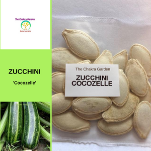 Zucchini 'Cocozelle'-EDIBLES-20 seeds-Heart Chakra
