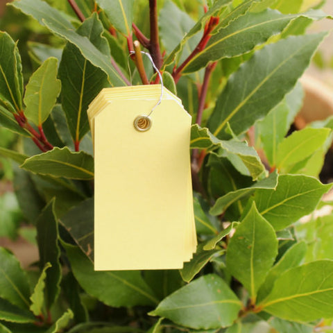 10 Yellow Eyelet Tags (small)