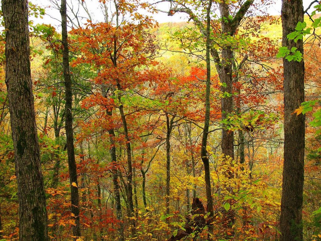 The Ozark National Forest, Arkansas, fall, colors, USA, leaves, autumn