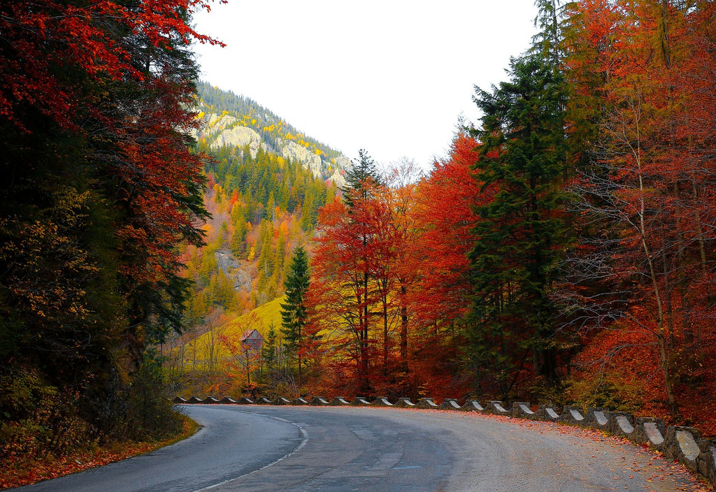why travel usa in the fall foliage leaves colors
