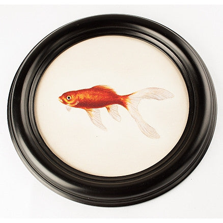 "Round frame with fish N°5 ""Comete"""