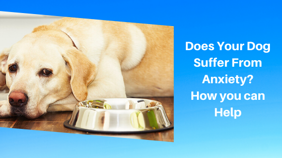 Does Your Dog Suffer From Anxiety? How you can Help