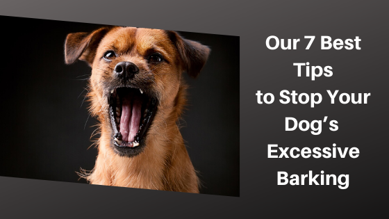 Our 7 Best Tips to Stop Your Dogs Excessive Barking