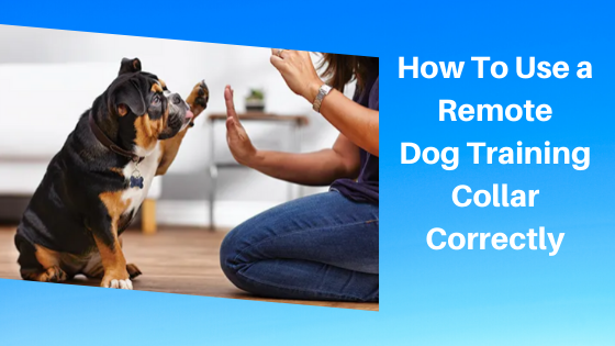 How To Use a Remote Dog Training Collar Correctly