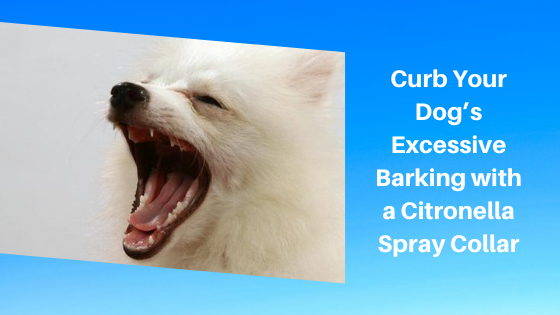 Curb Your Dog's Excessive Barking with a Citronella Spray Collar