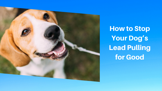 How to Stop Your Dog's Lead Pulling for Good