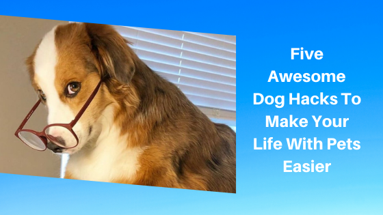 Five Awesome Dog Hacks To Make Your Life With Pets Easier