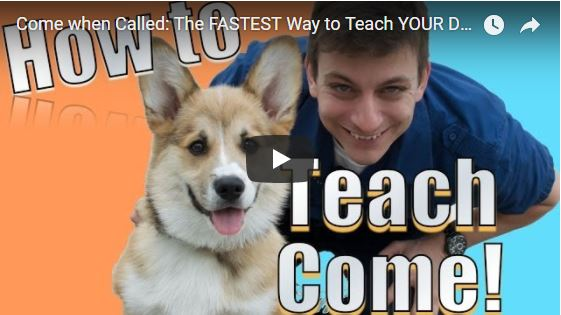 The FASTEST Way to Teach YOUR DOG to COME WHEN CALLED ANYWHERE!