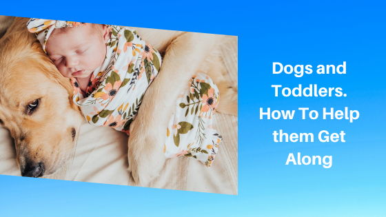 Dogs and Toddlers. How To Help them Get Along