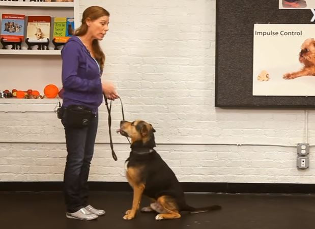 How to Teach Your Dog to Sit | Dog Training