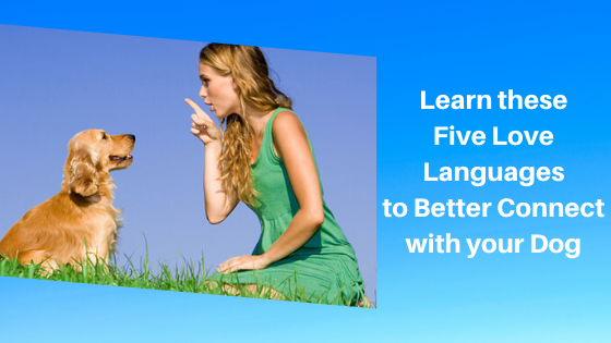 Learn these Five Love Languages to Better Connect with your Dog