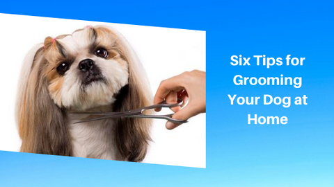 how to groom dog at home