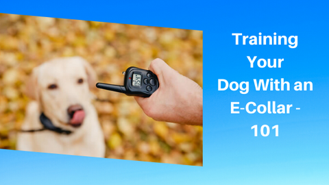 how dog training collar