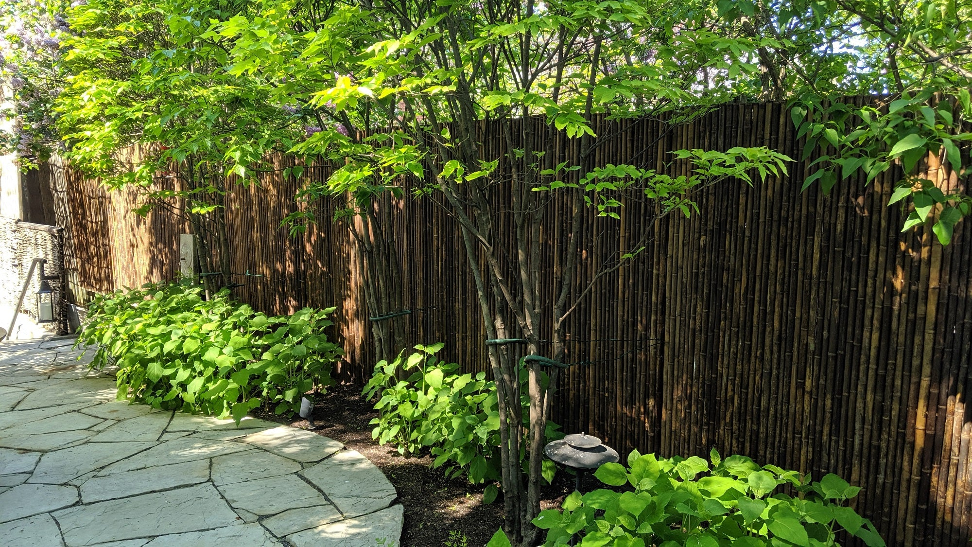 Dark Carbonized Bamboo Fencing